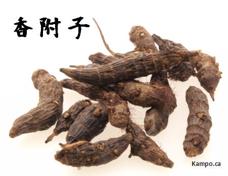 Kobushi